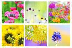 Collage of different flowers Stock Photography