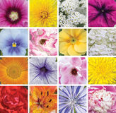 Collage of different flowers Royalty Free Stock Photos