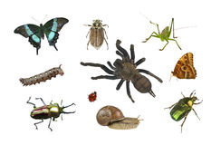 Collage of different insects on white background Royalty Free Stock Photography