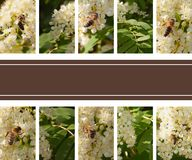 Collage of different photos of bees on flowers stock images