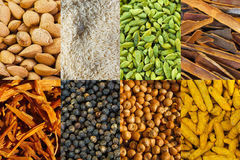 Collage of different spices and rice. Mix of different indian spices and rice vector illustration