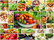 Collage of different vegetables. Vegetarian food Stock Photography