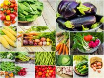 Collage of different vegetables. Vegetarian food. Selective focus. nature Royalty Free Stock Photo