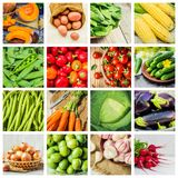 Collage of different vegetables. Vegetarian food. Selective focus. nature Stock Images