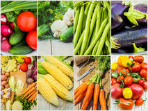 Collage of different vegetables. Vegetarian food. Royalty Free Stock Photo