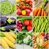 Collage of different vegetables. Vegetarian food. Stock Photography