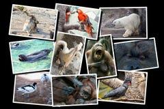 Collage differente degli animali sulla cartolina Immagine Stock