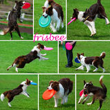 Collage with dogs playing with frisbee Royalty Free Stock Image