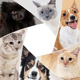 Collage of domestic animals in circle with copy space. Dogs and cats sitting together royalty free stock images