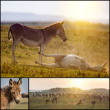 Collage of donkeys Stock Images