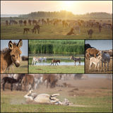 Collage of donkeys Royalty Free Stock Images