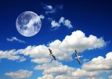 Collage - dos pájaros Imagen de archivo libre de regalías