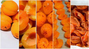 Collage of dried apricots. Technology of preparation of candied apricots stock images