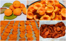Collage of dried apricots. Technology of preparation of candied apricots stock image