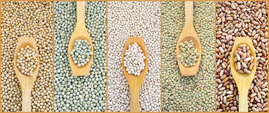 Collage of dried lentils, peas, soybeans, beans Royalty Free Stock Images