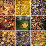 Collage of dry leaves at autumn Stock Photography