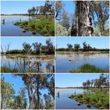 Collage du lac chez Malbup en parc national de Tuart près de l'Australie occidentale de Busselton Image libre de droits