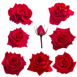 Collage of eight red roses Royalty Free Stock Image