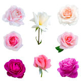 Collage of eight  roses Royalty Free Stock Photo