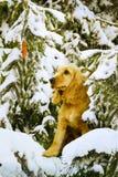 Collage en el tema del Año Nuevo del perro amarillo del año Imagen de archivo