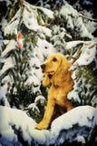 Collage en el tema del Año Nuevo del perro amarillo del año Fotos de archivo libres de regalías