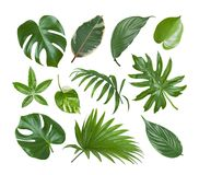 Collage of exotic plant green leaves isolated on white background Royalty Free Stock Image