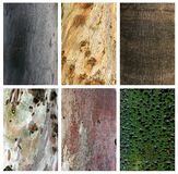 Collage of exotic wood trunks and textures Stock Image