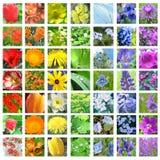 collage färgad blommaregnbåge Arkivbilder