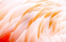 Collage för fågelfjädrar Foto med grafisk effekt royaltyfri bild