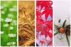 Collage för fyra säsonger royaltyfria foton