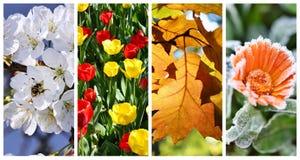 Collage för fyra säsonger: Vår sommar arkivbild