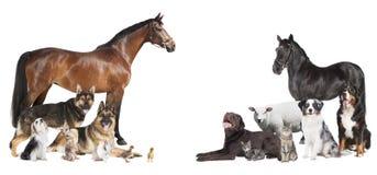 Collage för många djur royaltyfri bild
