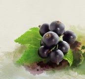 Collage för svart vinbär för vattenfärg Arkivfoto