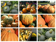 Collage of fall squashes. Collage of buttercup, pumpkin, and assorted autumn squashes Royalty Free Stock Photos