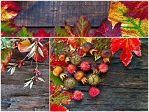 Collage of fall, winter foliage. Royalty Free Stock Photos