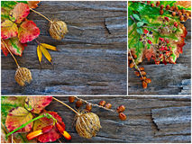 Collage of fall, winter foliage. Royalty Free Stock Images