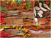 Collage of fall, winter foliage. Stock Photos