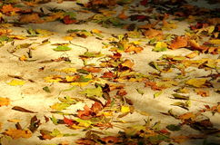 Colors of autumn in the sunlight. Collage of colored fallen leaves. Autumn background Stock Image