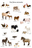 Collage of farm animals in English in front of whi royalty free stock image