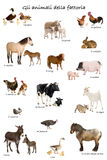Collage of farm animals in Italian. In front of white background, studio shot Royalty Free Stock Photos