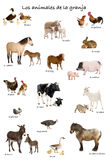 Collage of farm animals in Spanish. In front of white background, studio shot Royalty Free Stock Photo