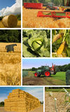 Collage farmer in harvesting Stock Photo