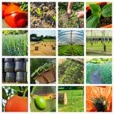 Collage fatto delle foto circa agricoltura Fotografia Stock