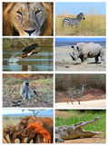 Collage fauna of Kenya. Collage of animals in the African savannah, Kenya Stock Photo