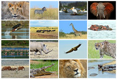 Collage fauna of Kenya Royalty Free Stock Photography