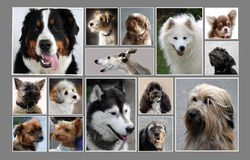 Collage with fifteen different  dog portraits