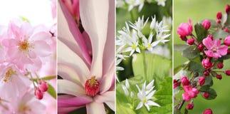 Collage - fioriture della molla,   Immagine Stock Libera da Diritti