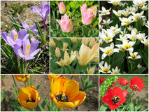 Collage of first spring flowers Royalty Free Stock Photo