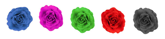 Collage of five fabric roses. A collage of five fabric roses on a white background Royalty Free Stock Photography