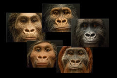 Collage 5 five faces of evolution theory Stock Image